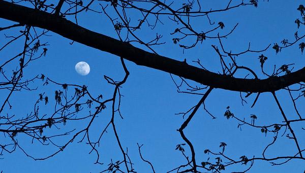 Photo: Moon scenic